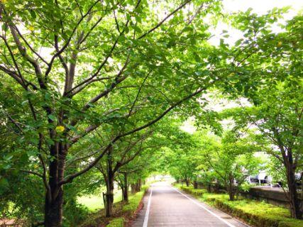 2020年度4月~5月の休診日をお知らせいたします|仙台市若林区 山浦整骨院